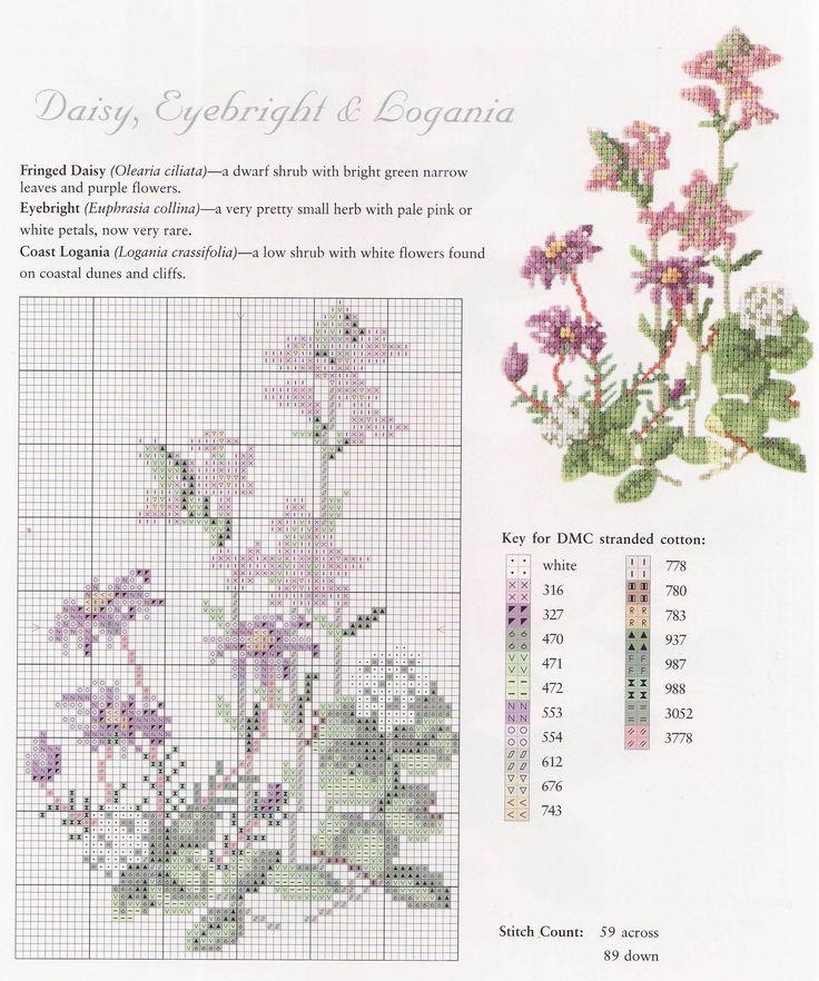 Daisy, Eyebright & Logania [Cross Stitch - Spring - Flowers] [Pattern / Chart]
