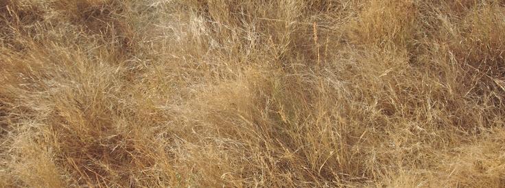 tjanpi -desert native grass