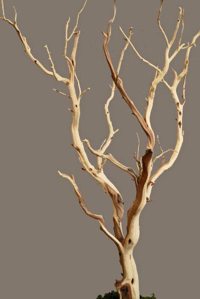 Manzanita Branch Sanded 21 38 Quot Natural Manzanita