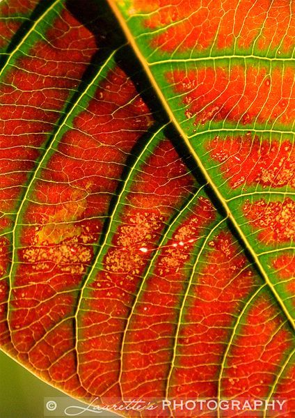 Leaf Abstract - Photograph