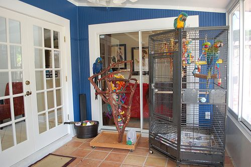 Bird Enclosures   Bird Cages For Sale