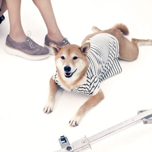 Make like our summer brand ambassador Menswear Dog, and chill out during  the lazy, hazy add fab shoes.