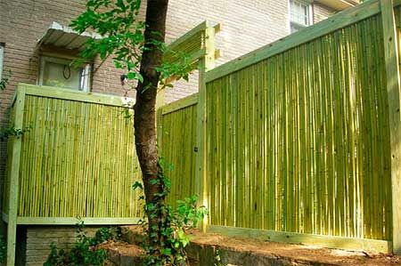 Bamboo Backyard Landscaping | backyard designs, backyard ideas, backyard landscape, backyard fence ...