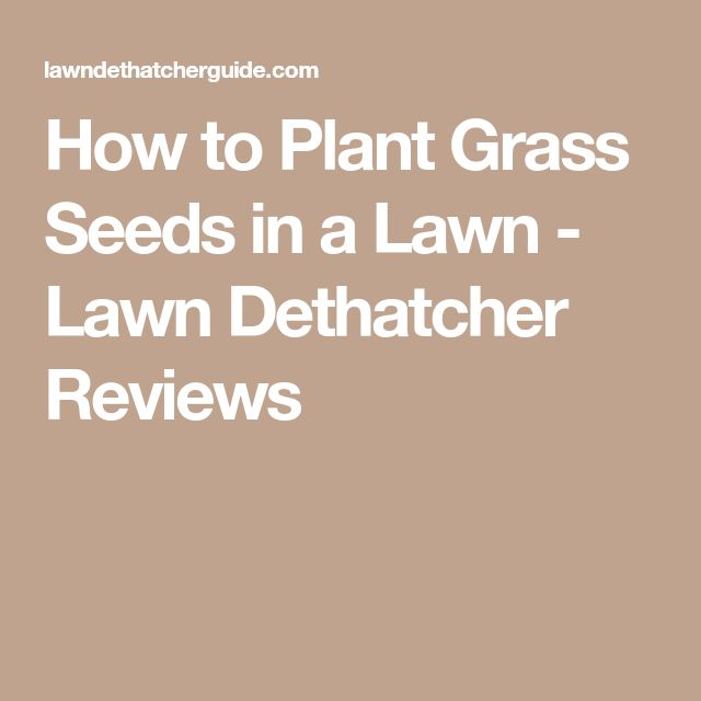 How to Plant Grass Seeds in a Lawn - Lawn Dethatcher Reviews