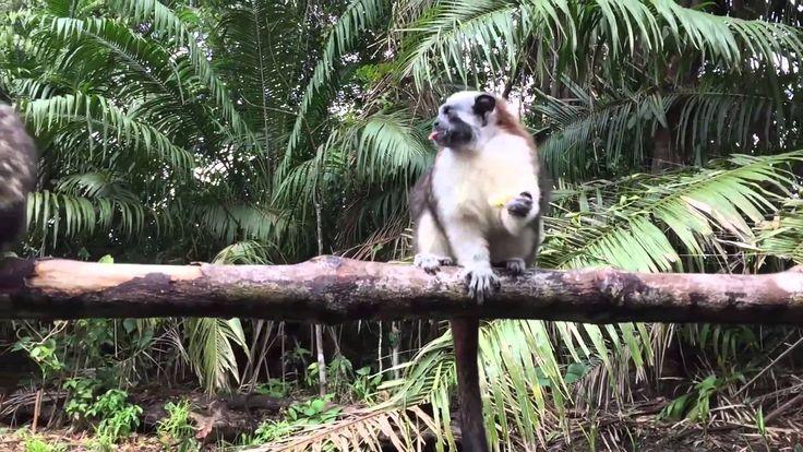 PANAMA - RIU PLAYA BLANCA & CANAL TOUR PANAMA - YouTube