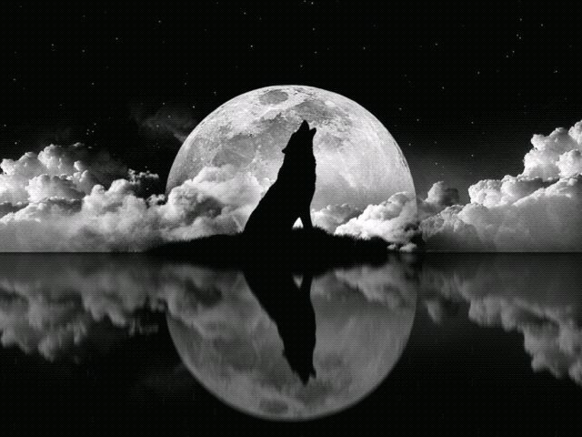 howling wolf with full moon and ocean | wolves | Pinterest ...