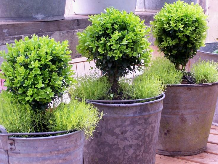 Topiaries garden Pinterest Plantas y Jardín, Hojalatas y Cubetas - paisaje jardin