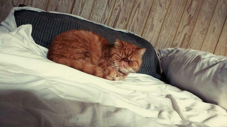 Este es Garfield y su nombre lo dice todo😀 Si es un persa fue encontrado en la calle siendo mayor y es un angelito 😍