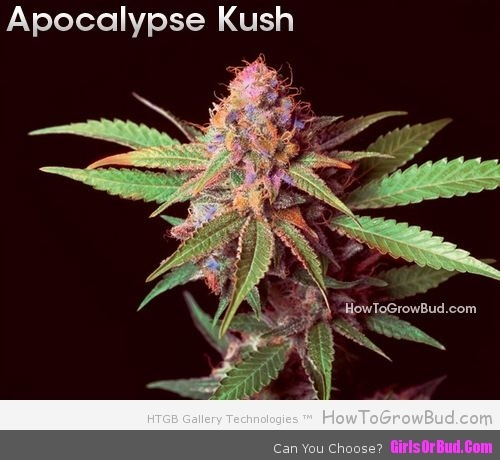 141 best images about weed on pinterest bud medical