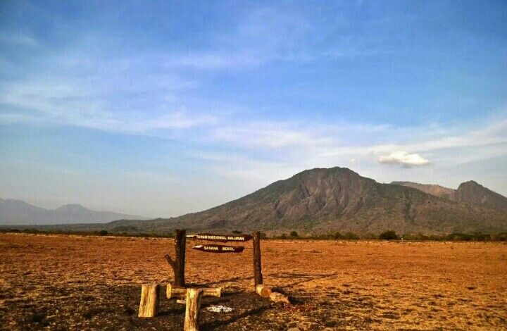 SAVANA Bekol  is like as AFRICA VAN JAVA IN Baluran National Park.  #Savana Broad set in Mount baluran is a miniature Africa in Indonesia. Not just merely savanna in Savana Bekol, there are also several buildings for special facilities for the traveler and the viewing post for a panoramic view around. ♡