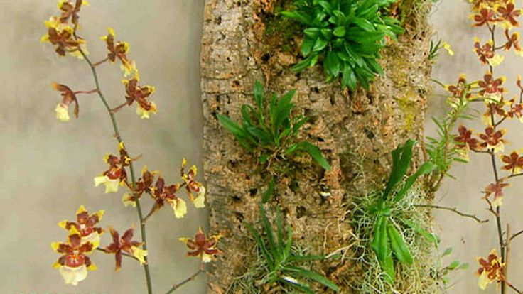 Image result for wall mounted orchids bark