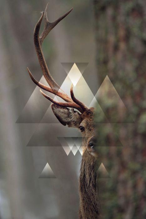 design deer