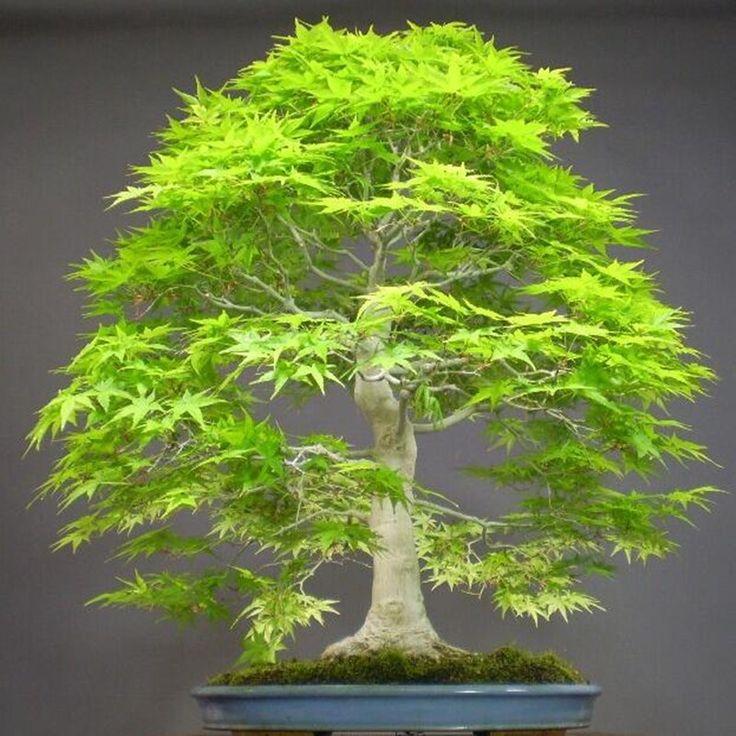 Consider, jade indica training of consider, that