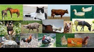 sonidos de animales dela granja - YouTube