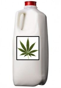 Cannabis Milk Recipe: Many recipes include milk as one of the main ingredients and because milk contains fat, it can be infused with THC just like butter, olive oil, and many other ingredients.
