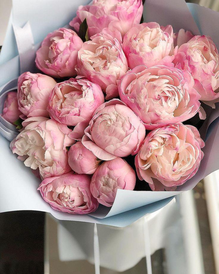 Фото цветов пионов