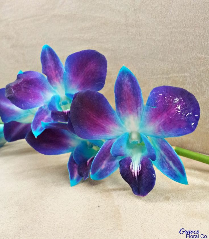 Silk Blue Orchids | Weddingbee boards