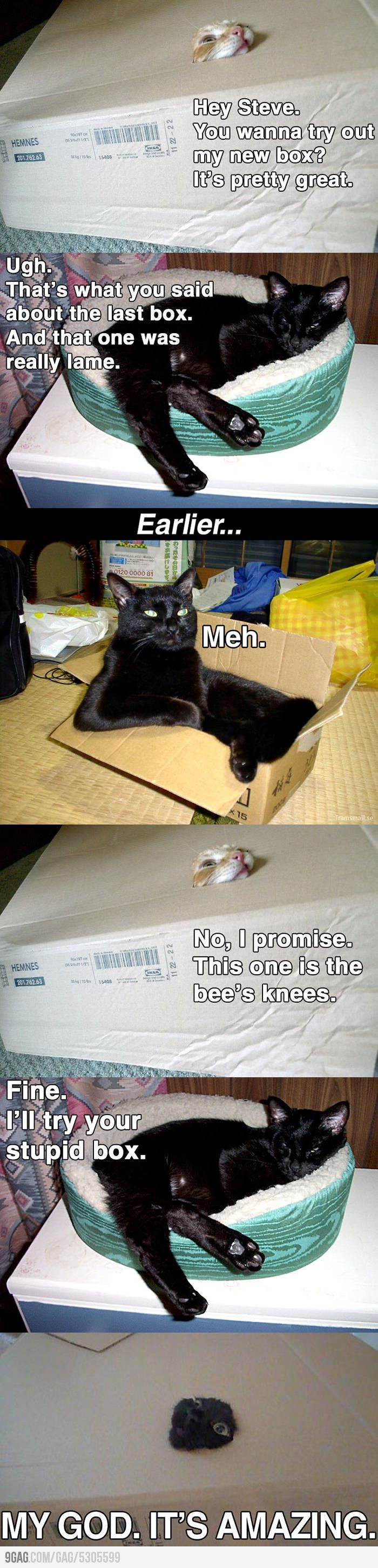 cats and their boxes