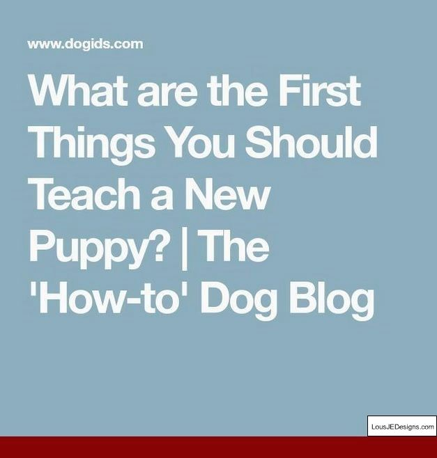 How To Train A Small Dog To Stop Biting And Pics Of How To Train