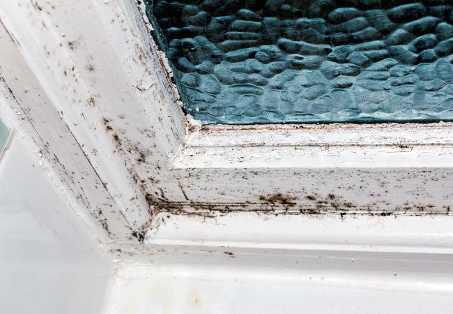 Best 20 remove black mold ideas on pinterest - How to get rid of surface mold in bathroom ...