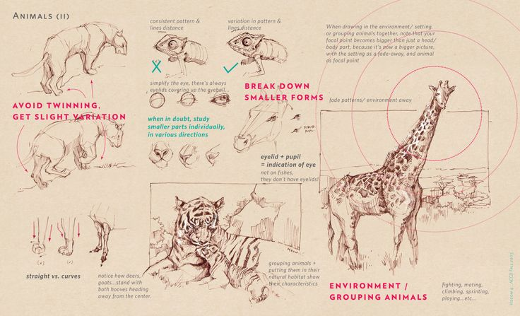 We were at the LA Zoo last Saturday. Too many stuffs in animal drawing. I still find it super hard to draw animals :/ Some are directly from Joe Weatherly's drawing guidebook. This is merely for...