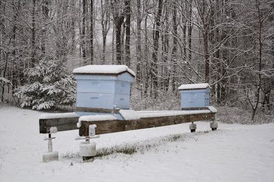 Brushy Mountain Bee Farm: Helping Your Bee Hives in the Winter
