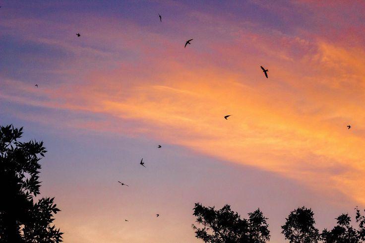 Небо птицы закат розовое небо майкоп