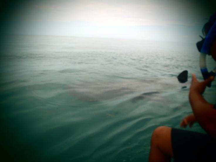 Nadando con Tiburon Ballena, Holbox. Una experiencia única!