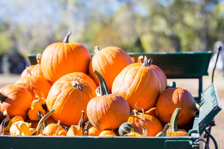 Visit a local pumpkin patch to enjoy hayrides, wind through a corn maze and see…