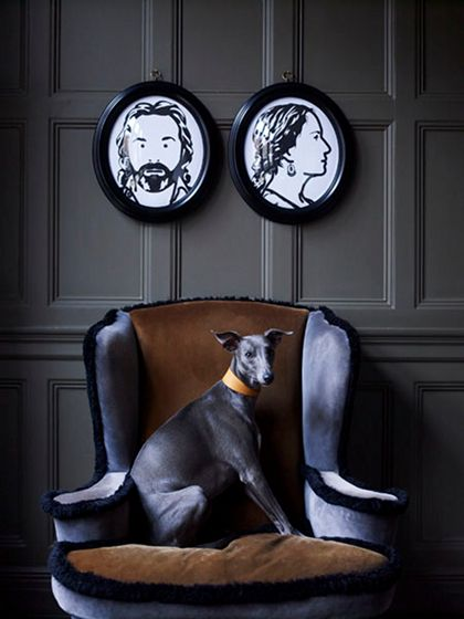 ::Decor, Wall Colors, Inspiration, Chairs, Interiors, Grey Wall, Black, Dogs Portraits, Italian Greyhounds