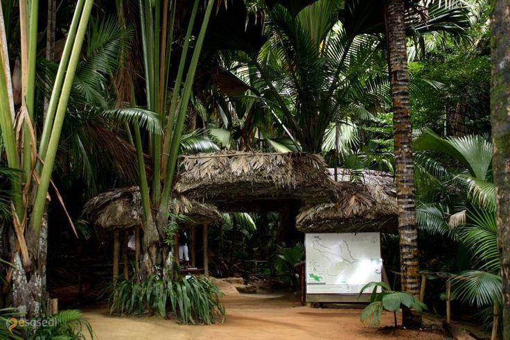 Природный резерват Валле-де-Мэ – #Сейшельские_острова (#SC) Добро пожаловать в Vallée de Mai Nature Reserve, где произрастает пальма, семена которой являются самыми крупными среди всех растений.  ↳ http://ru.esosedi.org/SC/places/1000213489/prirodnyiy_rezervat_valle_de_mye/