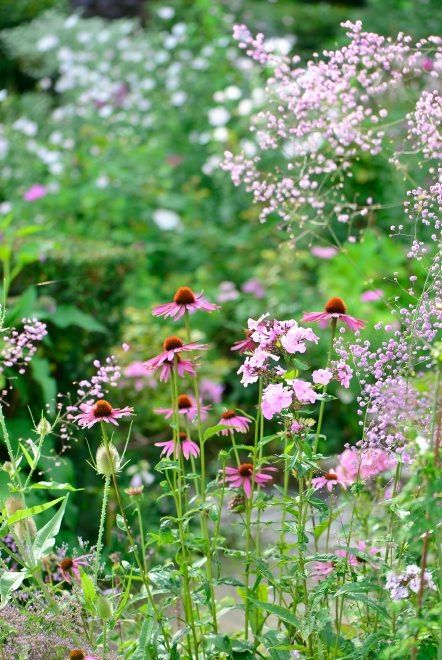Planting a mixed meadow border