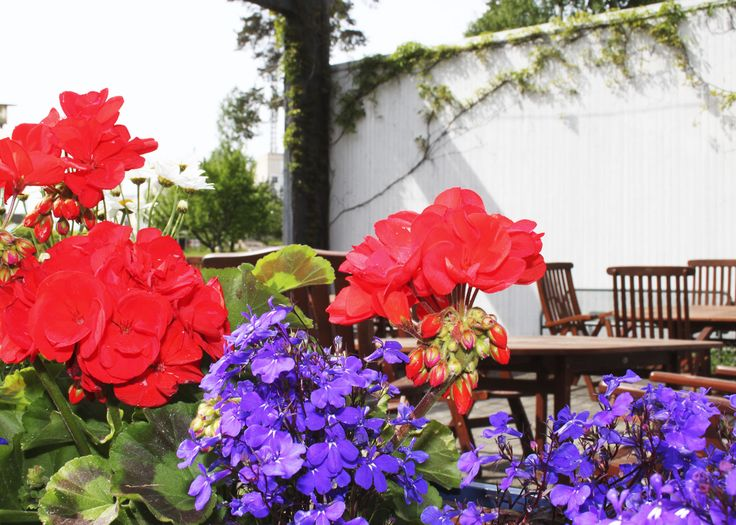 Kesällä Foibessa lounaasta voi nauttia viihtyisällä terassilla.