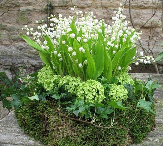 Image result for photos de muguet fleur