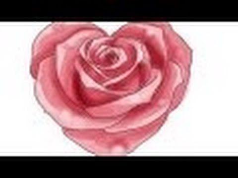 tolles die magie der bulgarischen rose auflistung bild oder dfbdfbadfafbfcc rose drawings roses