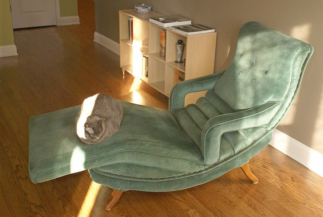 17 Best images about dotties chair on Pinterest