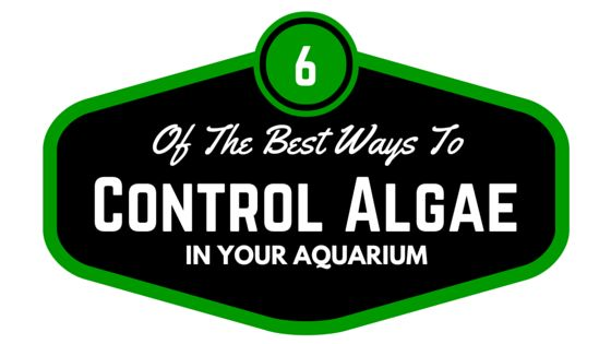 If you have an algae problem or you're just trying to prevent growth, you should understand these 6 tricks.