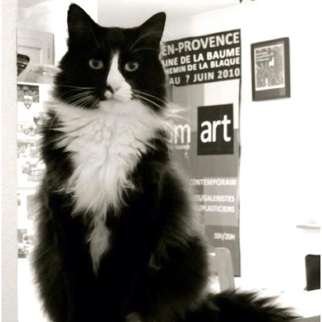 Henri le chat noir!