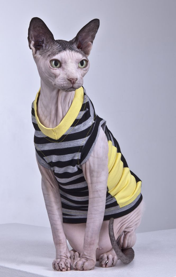 Sphynx Cat Wear clothing