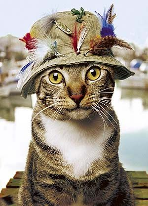 "PP: this must be the prize winning picture for ""cats in hats!"" (i'm sure my kitties would have all the feathers chewed off in 3 seconds)"