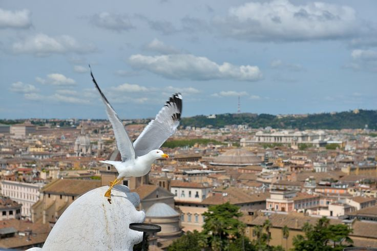 Città di Roma by Welbis Pestana on 500px