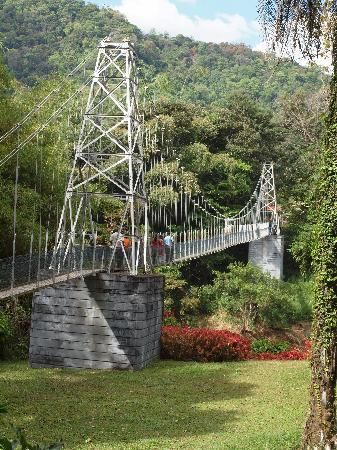 Suspension bridge at the Royal Botanical Gardens, Sri Lanka