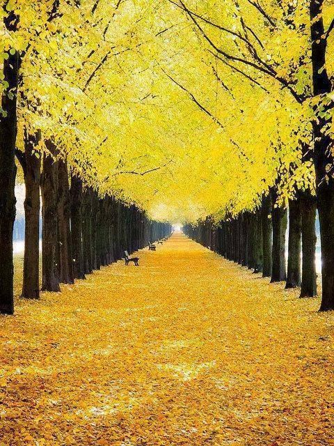 Yellow and black autumn in Hanover,Germany