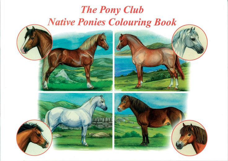 The Pony Club Native Ponies Colouring Book   Distributed by Quiller Publishing. A fantastic colouring book for lovers of all Native Ponies. #horse #pony #native #breed# colour
