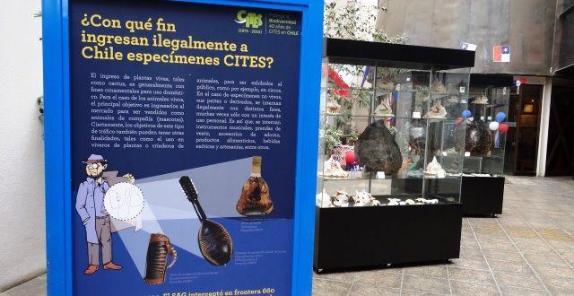 La muestra, desarrollada por el Museo de Historia Natural de Valparaíso y patrocinada por el Comité Nacional CITES y la Secretaría CITES de Ginebra Suiza, consta de tres módulos especialmente diseñados para la ocasión: sensibilización, educación y acción, con fotografías de fauna y flora silvestres protegidas por CITES.