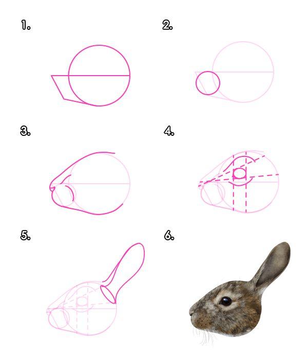 How to Draw Animals: Hares and Rabbits - Tuts+ Design & Illustration Tutorial__rabbit