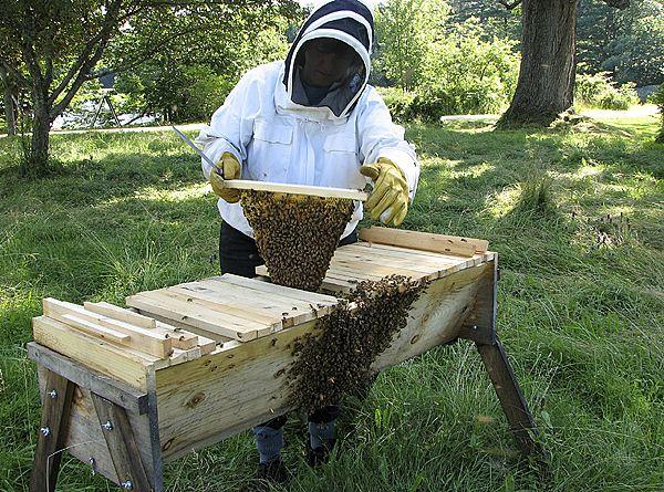 Beekeeping in western Canada : Szabo, T. I : Free Download ...