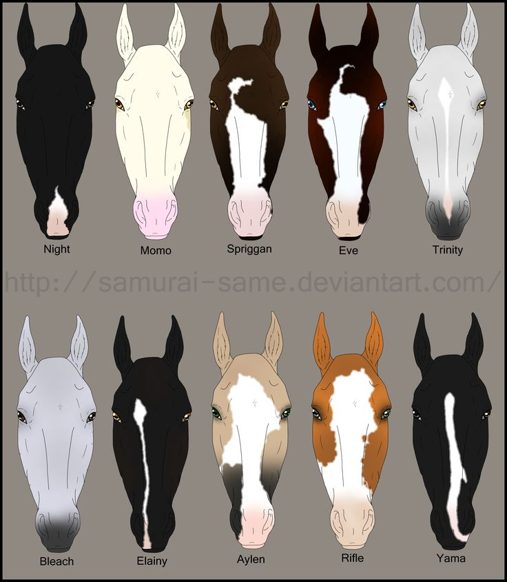 Horse Body Markings Related Keywords Suggestions Horse Body