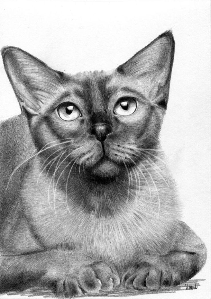 Rysunek kota syjamskiego