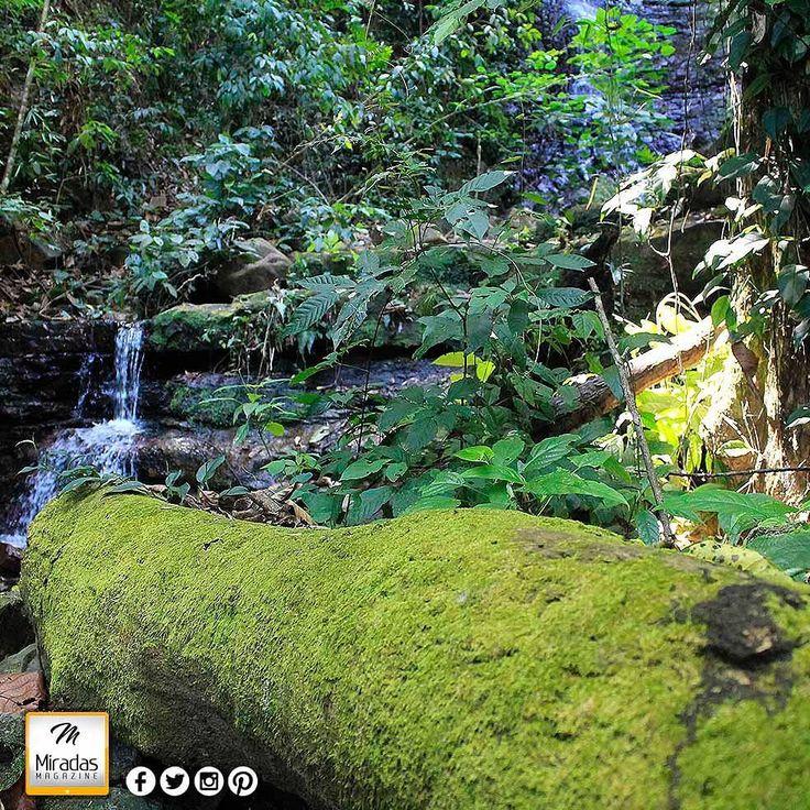 Agradecidos con los amigos de @noonoruyojso por la atención de este domingo en la ruta del Saltico. Hermosos parajes y senderos esta vez más clima de selva. La comida exquisita cocteles y licores de primera.  #NoonoruYojso #ConoceLosAltosdeSucre #AltosdeSucre #Anzoategui #miradasmagazine #miradasradio